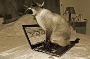 cat on a laptop